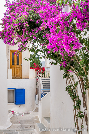 Flowers in Chora on Ios Greece