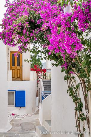 Flowers in Chora on Ios Greece